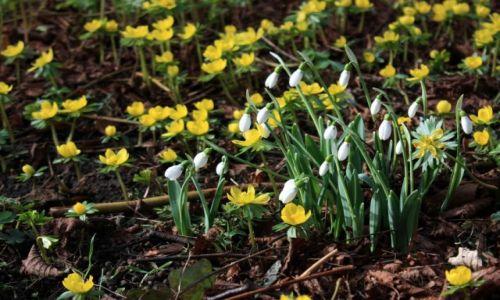 Zdjęcie ANGLIA / East Midlands / Kettering / Wiosna idzie!
