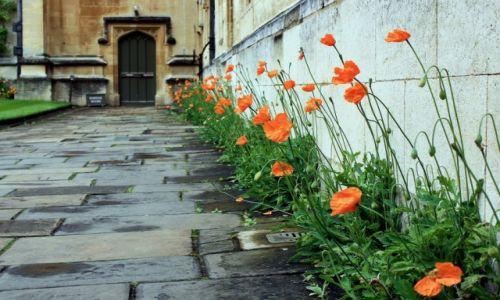 Zdjecie ANGLIA / Oxfordshire / Oxford / Maki z kolegialnego dziedzińca