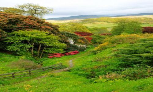 Zdjęcie ANGLIA / Cumbria / Anglia / Muncaster Castle Gardens