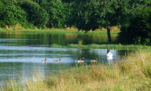 Zdjecie ANGLIA / Cambridgeshire / Fen Drayton Lakes / Fen Drayton Lake 3