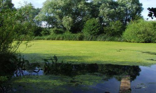 Zdjęcie ANGLIA / Cambridgeshire / Fen Drayton Lakes / Fen Drayton Lake 9