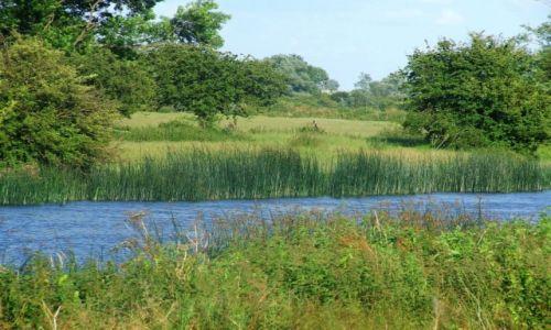 Zdjęcie ANGLIA / Cambridgeshire / Fen Drayton Lakes / Fen Drayton Lake 12
