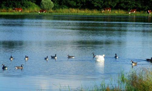 Zdjęcie ANGLIA / Cambridgeshire / Fen Drayton Lakes / Fen Drayton Lake 13