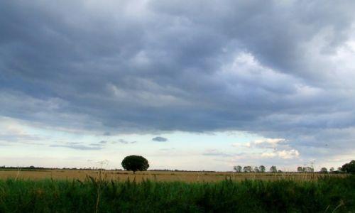 Zdjęcie ANGLIA / Cambridgeshire / Fen Drayton Lakes / Fen Drayton Lake 14