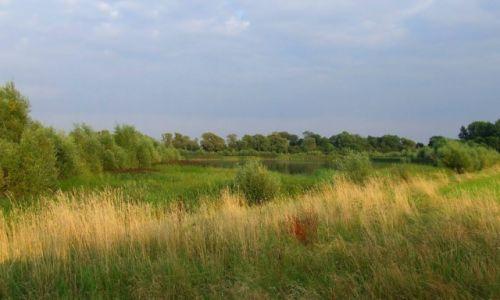 Zdjęcie ANGLIA / Cambridgeshire / Fen Drayton Lakes / Fen Drayton Lake 15