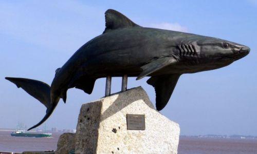 Zdjecie ANGLIA / East Yorkshire / Hull / Rekin - The Deep