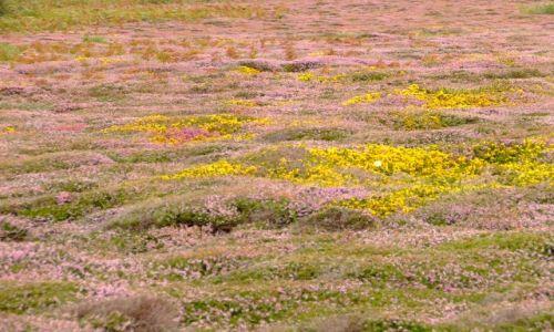 Zdjęcie ANGLIA / Bournemouth / poludniowa anglia / troche łąki..kolorowej