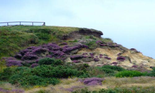 Zdjęcie ANGLIA / Bournemouth / poludniowa anglia / prawie jak góra