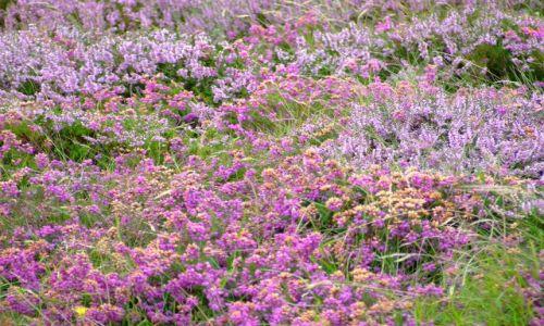 Zdjęcie ANGLIA / Bournemouth / poludniowa anglia / kwiatki