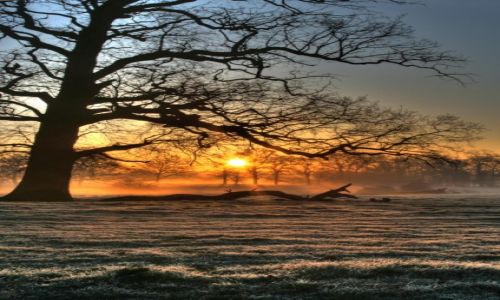 ANGLIA / Kent / Okoline Linton / Zimowy poranek