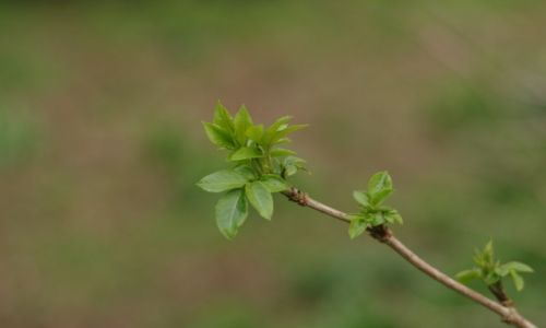 Zdjęcie ANGLIA / hampshire / hamble / wiosna is coming :)