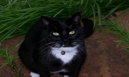 Zdjęcie ANGLIA / - / Carlisle / Kot Sąsiad