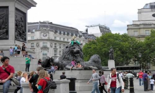 Zdjęcie ANGLIA / Wielki Londyn / Londyn / Lew na Placu Trafalgar Square