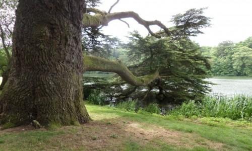 Zdjecie ANGLIA /  Oxfordshire / Blenheim Palace - Park / dosięgnąć wody
