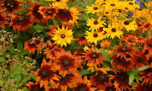 Zdjęcie ANGLIA / Derbyshire / Derbyshire / Kwiatki, bratki i ....