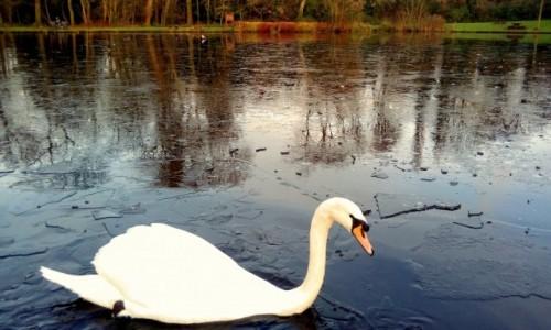 Zdjęcie ANGLIA / Lancashire / Preston / Lodołamacz