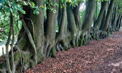 Zdjecie ANGLIA / Hrabstwo Surrey / Hindhead wieś / Atrakcja turystyczna