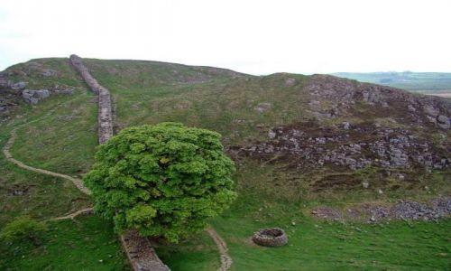 Zdjecie ANGLIA / Northumberland  National Park / droga  B6318 /  symboliczne drzewo