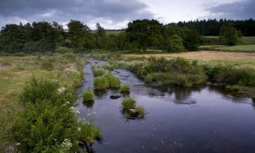 Zdjęcie ANGLIA / Devon / Postbridge / Dartmoor / East Dart River