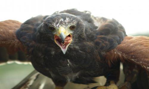 Zdjęcie ANGLIA / Oxfordshire / Oxfordshire / Zwierzątka- drapieżnik