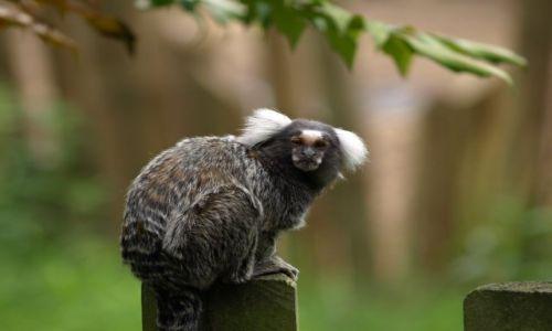 Zdjęcie ANGLIA / Oxfordshire / Oxfordshire / Zwierzątka- mam problem z nazwą, ale śliczny:-)