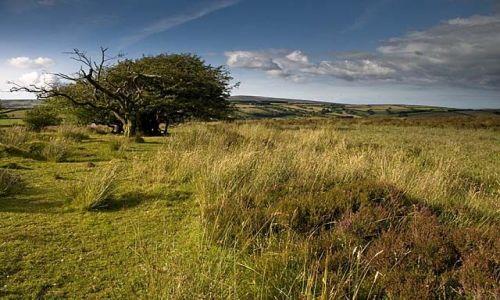 Zdjęcie ANGLIA / Polnocny Devon / Exmoor / Park Narodowy Exmoor