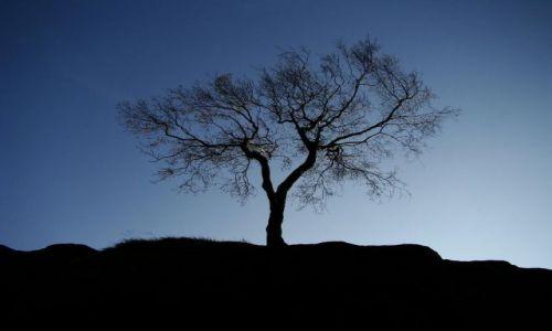 Zdjecie ANGLIA / North Yorkshire / Brimham Rocks / samotna brzoza