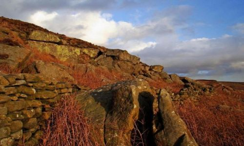 Zdjecie ANGLIA / North  Yorkshire /  North York Moors National Park / cisza  wokol  jak  makiem..........