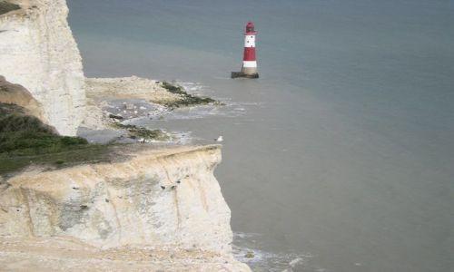 Zdjęcie ANGLIA / East Sussex / Eastbourne / mewa