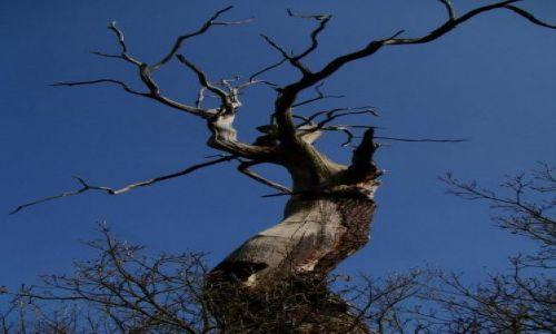 Zdjęcie ANGLIA / Nothingamshire / Sheroowd / Serwood forest