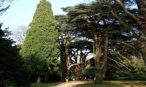 Zdjęcie ANGLIA / Nothingamshire / Clumber Park / w krainie olbrzymow