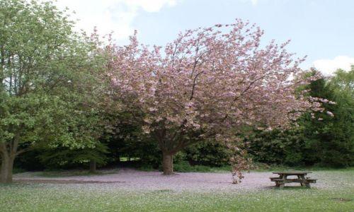 Zdjecie ANGLIA / Cheschire / Anderton Park / Angielski krajobraz