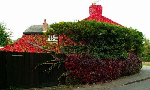 Zdjecie ANGLIA / Cheshire / Churton / Angielska jesień