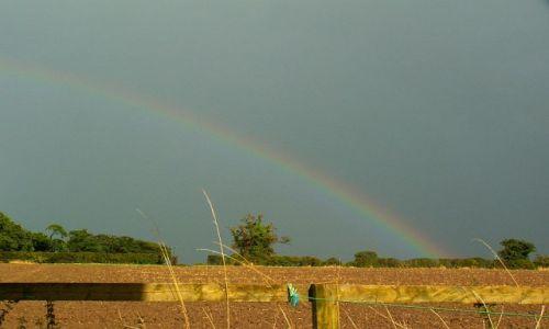 Zdjęcie ANGLIA / Cheshire / Churton / Częsty widok z okna
