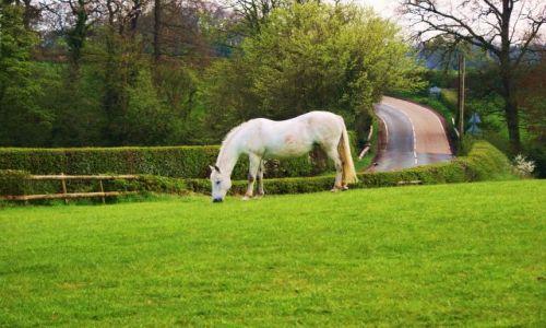 Zdjęcie ANGLIA / Shropshire  / Shropshire / Widok