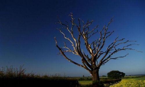 Zdjecie ANGLIA / North Yorkshire / Marton le Moor / samotne drzewo