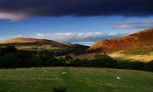 Zdjęcie ANGLIA / Cumbria / okolice Thornythwaite / maly swiat owieczek