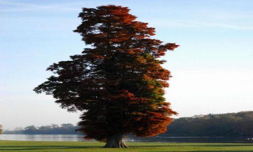 Zdjęcie ANGLIA / Nothingamshire / Clumber Park / portret drzewa
