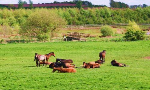 Zdjecie ANGLIA / Shropshire / Market Drayton / Odpoczynek