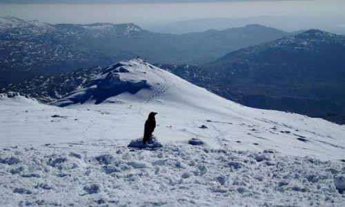 Zdjęcie ANGLIA / Lake District / Scafell Pike / czarny samotnik