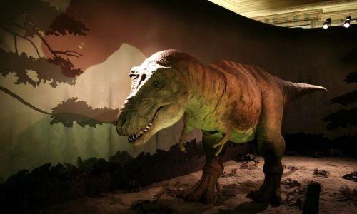ANGLIA / Londyn / Muzeum Historii Naturalnej / Tyranozaur