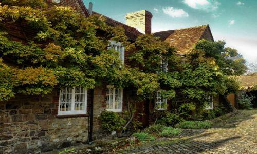 Zdjęcie ANGLIA / West Sussex / Petworth / Wśród winorośli