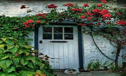 Zdjęcie ANGLIA / West Sussex / Bognor Regis / Konkurs