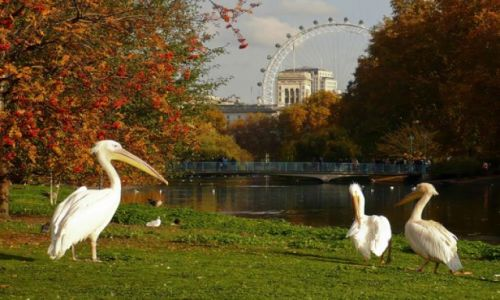 Zdjecie ANGLIA / Westminster / Londyn / St. Jame\'s Park