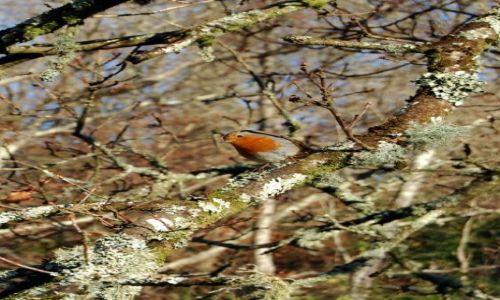 Zdjęcie ANGLIA / Cornwall / Seaton / ptaszek