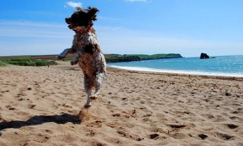 Zdjecie ANGLIA / Cornwall / Perranporth / hoop
