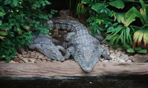 Zdjęcie ANGLIA / Devon / Paignton Zoo / w oczekiwaniu na pokarm