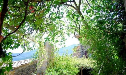 Zdjęcie ANGLIA / Devon / Dartmouth / Czerwone liście