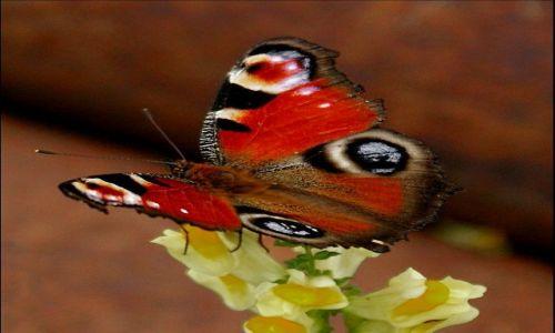 Zdjęcie ANGLIA / Cornwall / Downderry / motylek2