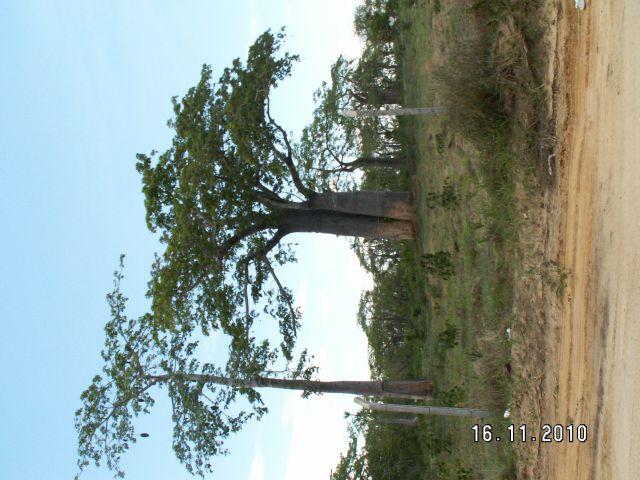 Zdjęcia: luanda, luanda, baobab luanda, ANGOLA